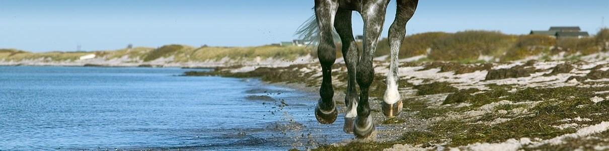 Cemtec Ab, specialist på hästskor!